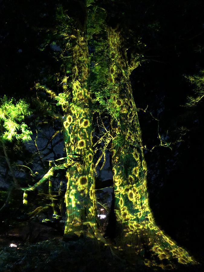 「増殖する生命の巨木 - 太郎杉」