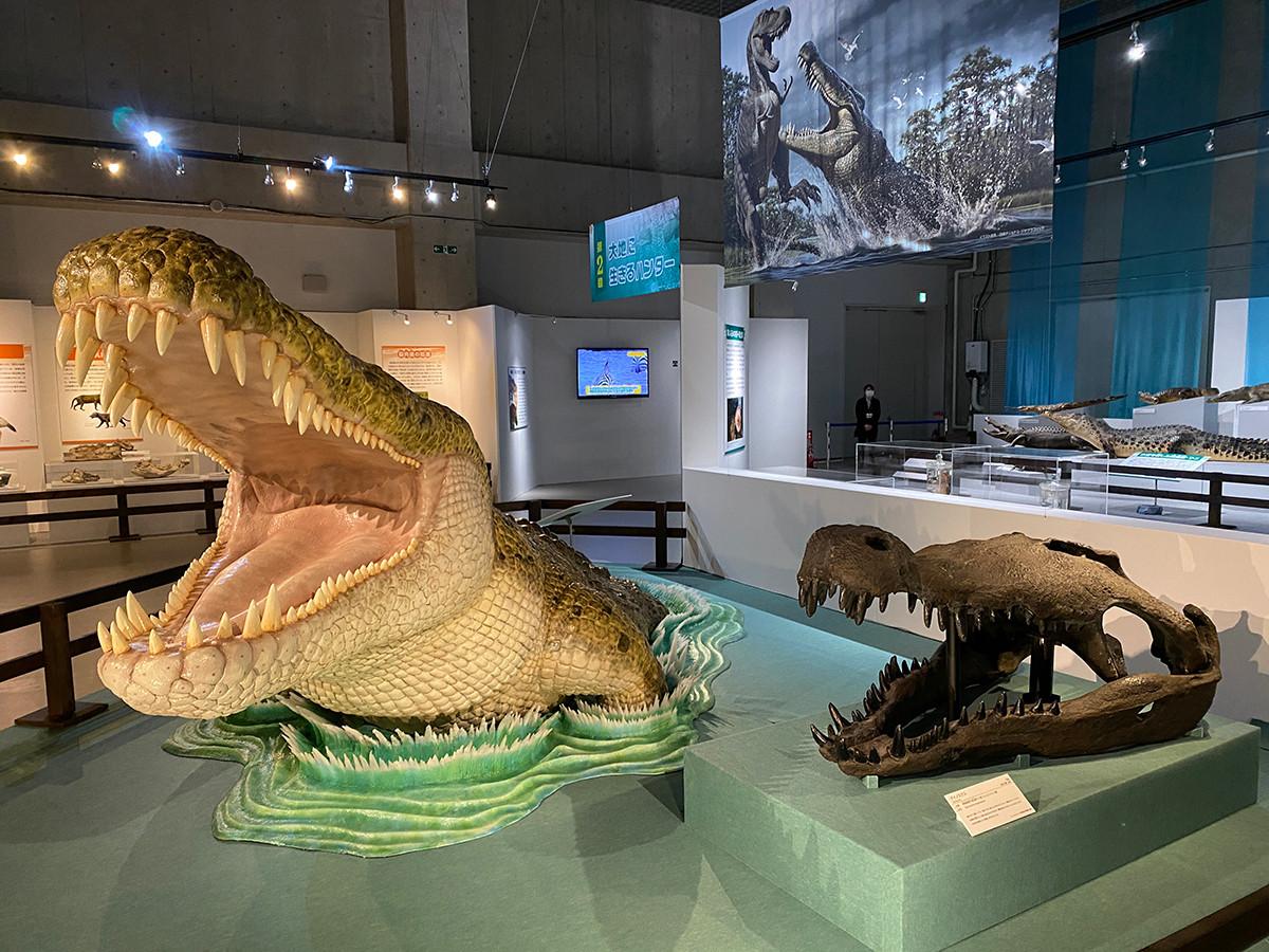 国立科学博物館「大地のハンター展」会場