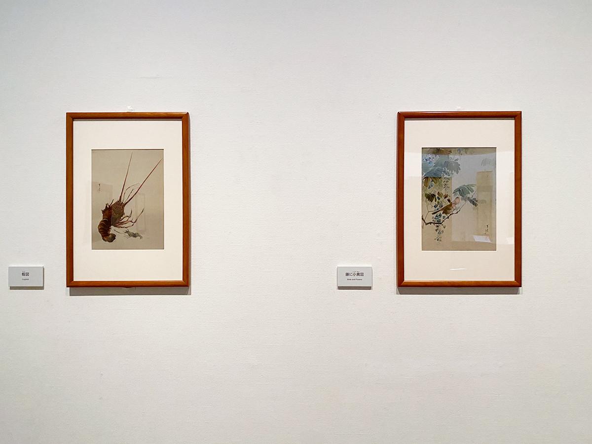 渡辺省亭《花鳥魚鰕画冊》メトロポリタン美術館 (左から)「蝦図」「藤に小禽図」[ともに全期間展示]
