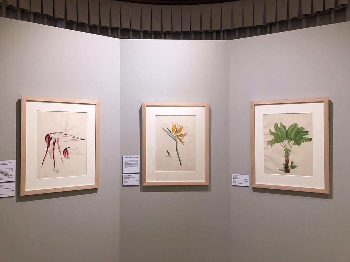 東京都庭園美術館「キューガーデン 英国王室が愛した花々」会場