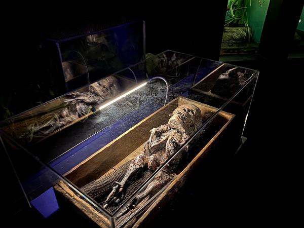 """サンシャイン水族館で""""セイレーン""""が生体展示? ― ホラー水族館第4弾"""
