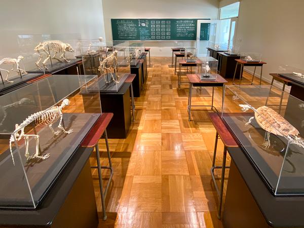展示室8「生命のかたち」には、脊椎動物の骨が並びます